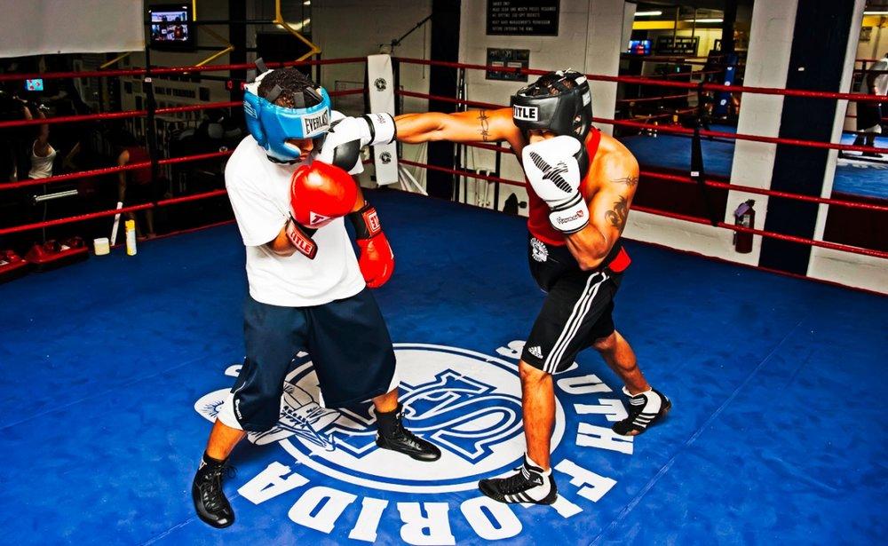 box-sparring-1.jpg