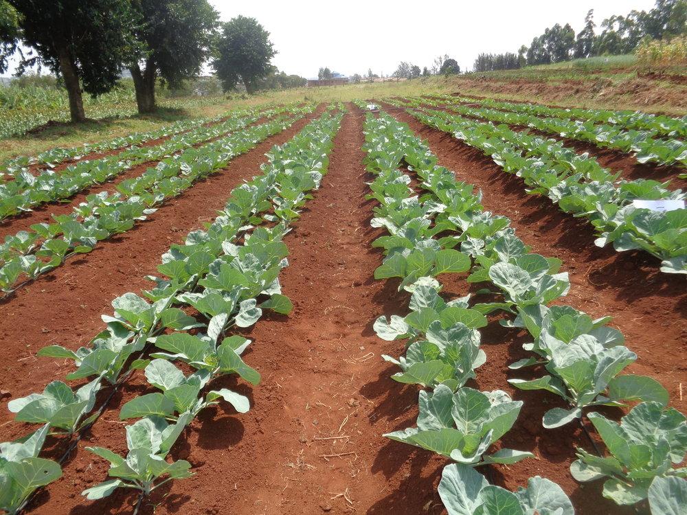 mwoa food security project 2.JPG