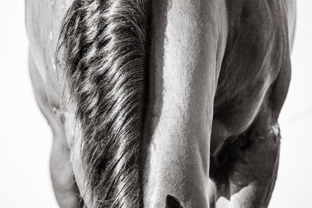 Brooke_Horses_web-01.jpg