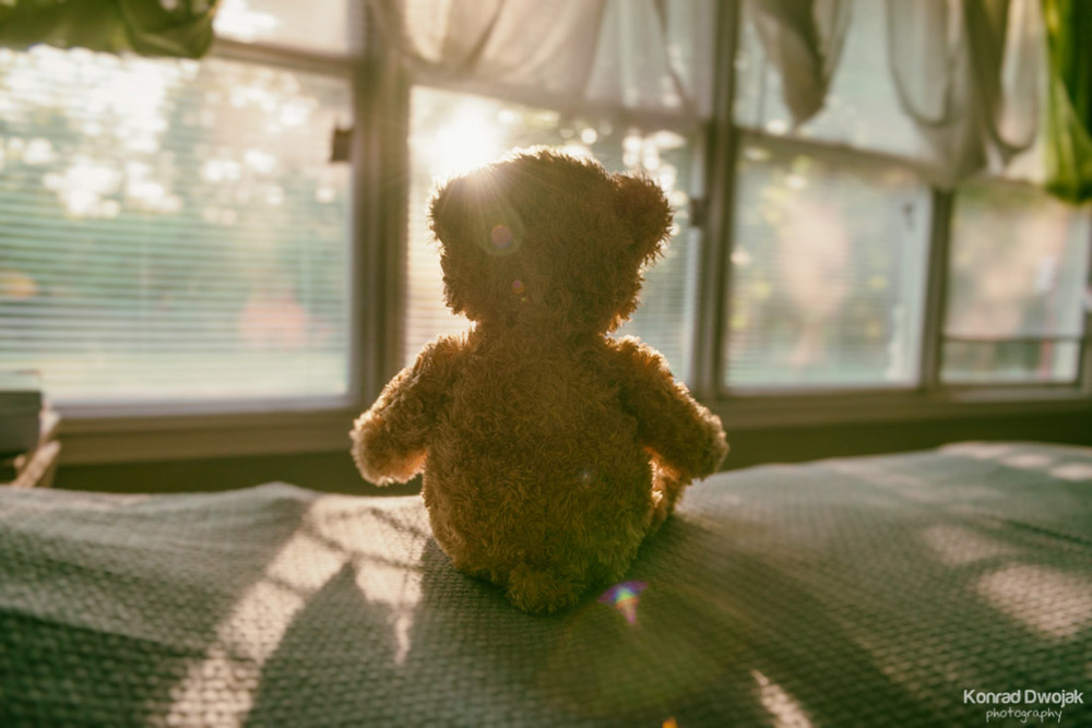 Thabo (a teddy bear) reflecting on his past adventures while looking at the sunset