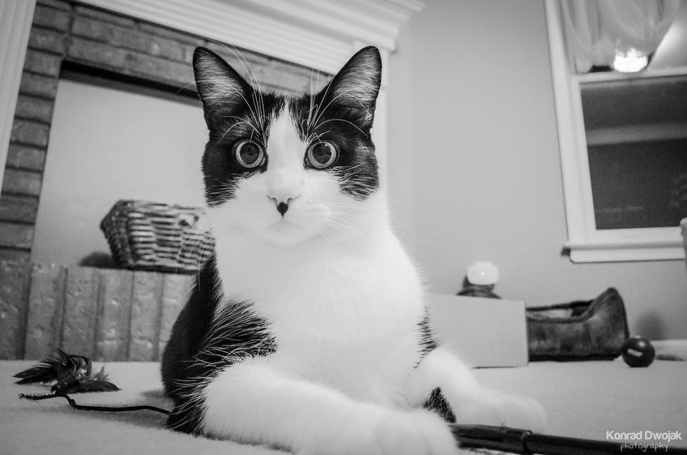 Oh! Hello....miau!