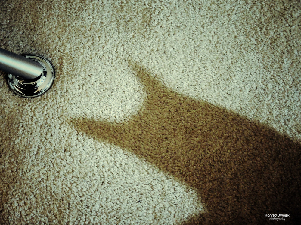 My cat is the real Batman!
