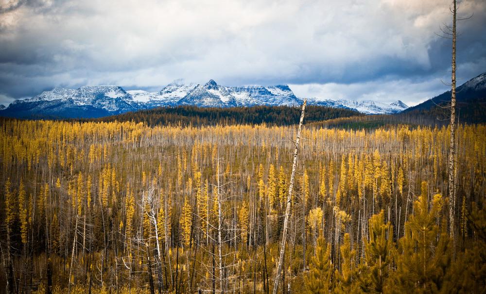 Inside North Fork Road, Montana