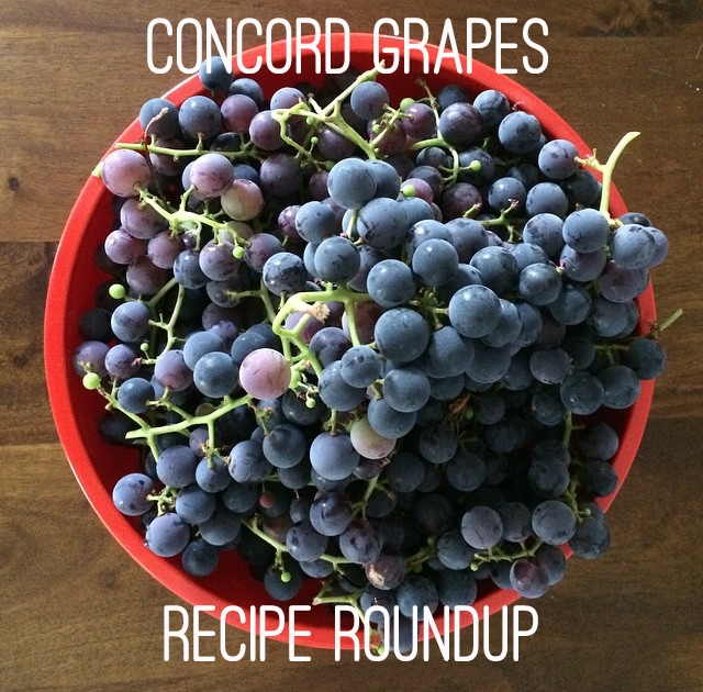 Concord Grapes Recipe Roundup - www.hoorayforrain.com