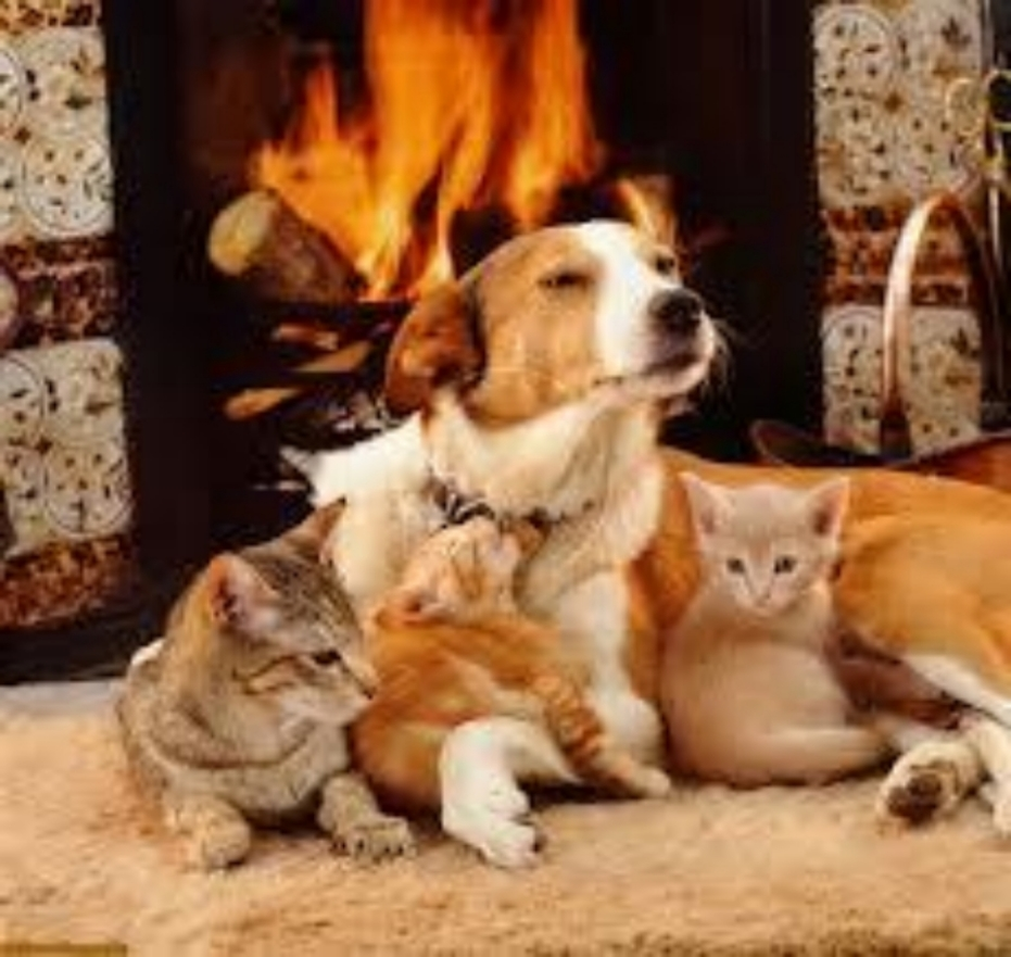 winter-pets-fireplace.jpg
