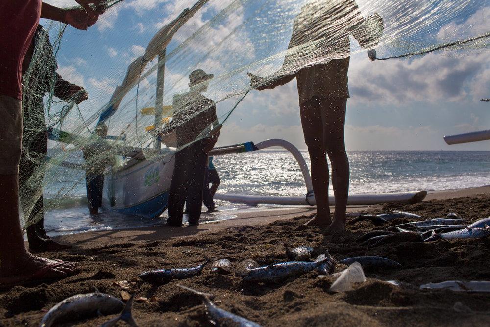 ©mette_lampcov_Bali-fish-5.jpg