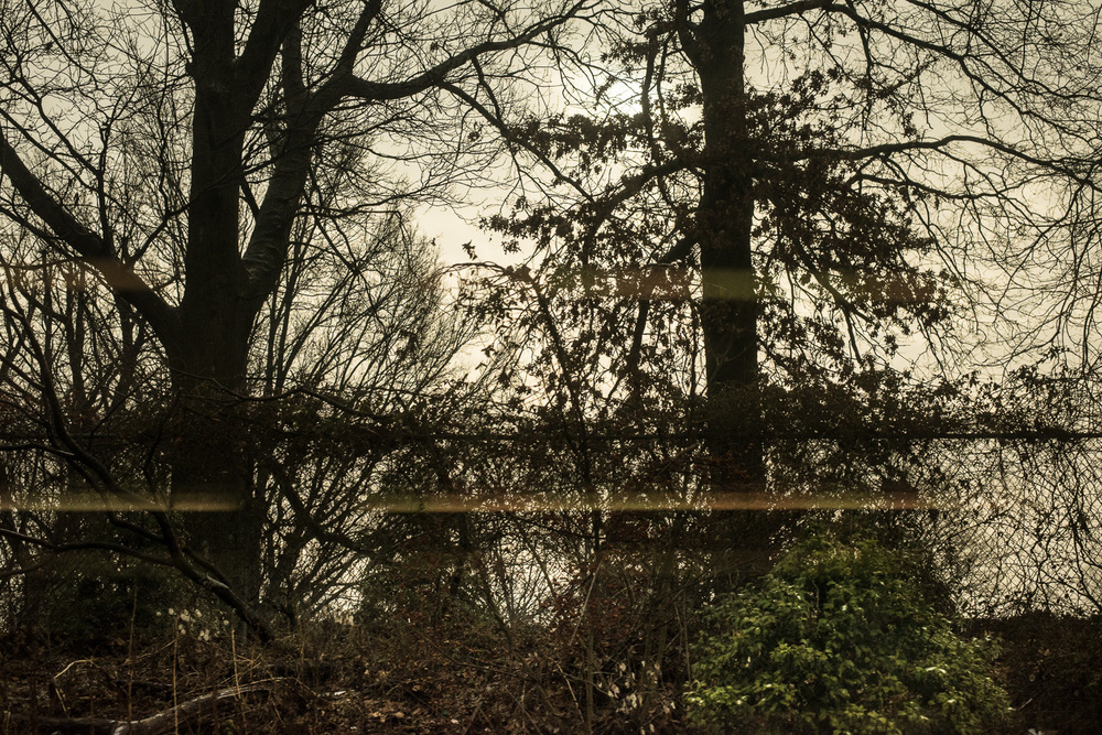 Black Trees and Reflection.jpg