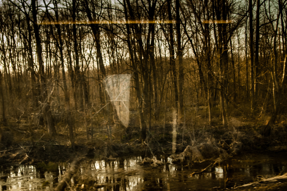 Phantoms in the Trees.jpg