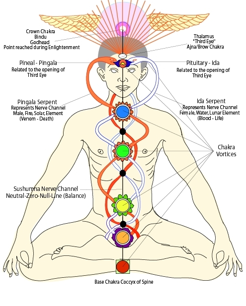 Demonstrating the subtle energy system; sushumna, ida and pingala nadis, kundalini and chakras.