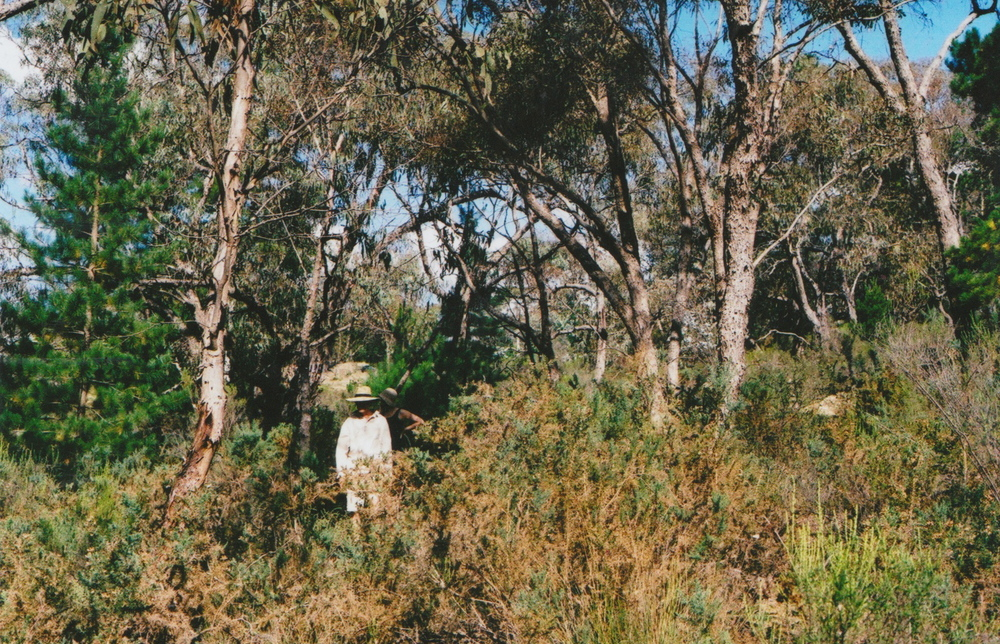 The Great Aussie Christmas Tree Hunt, 2012