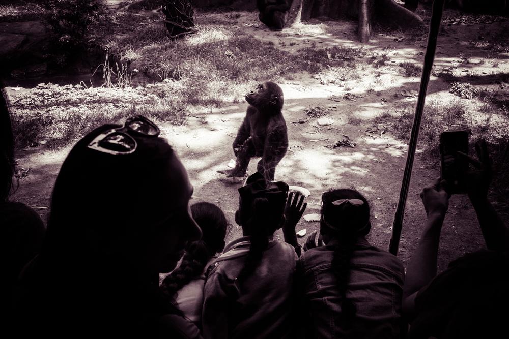 zoo impact 2016-15.jpg