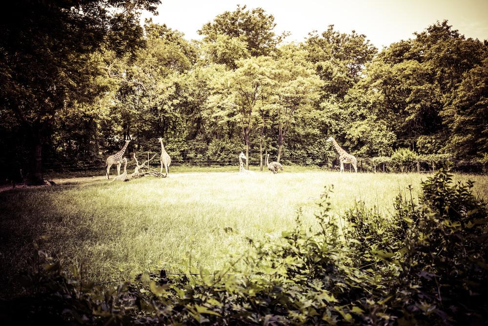 zoo impact 2016-21.jpg