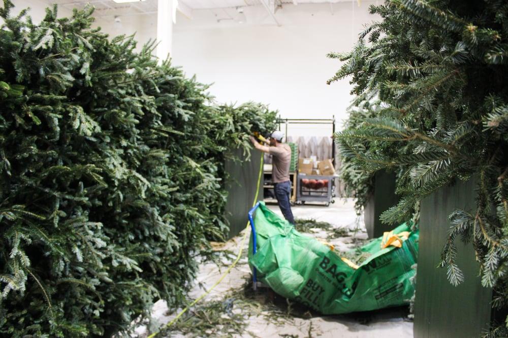 PCC_Christmas_1.jpg