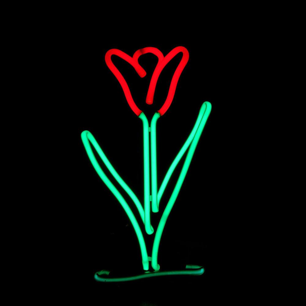 Designer Neon Floral Arrangements by Famous American Neon Light Sculptor