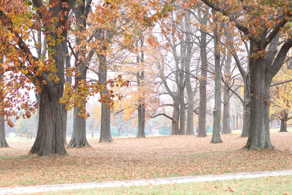 Fall at Valley Forge- Enchanting Elegance