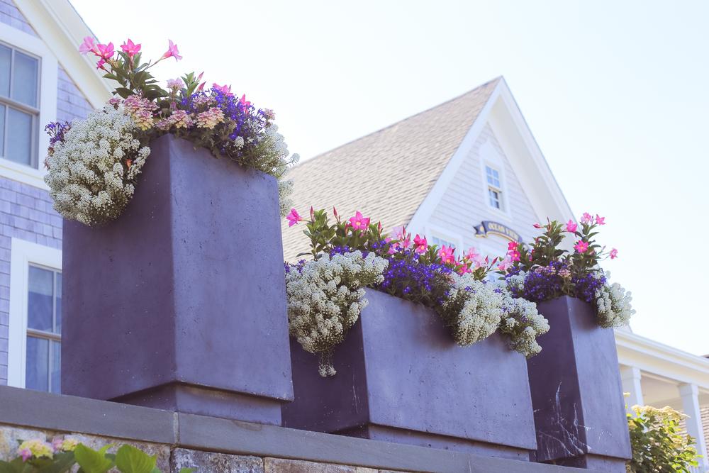 Rose Dreams- Enchanting Elegance