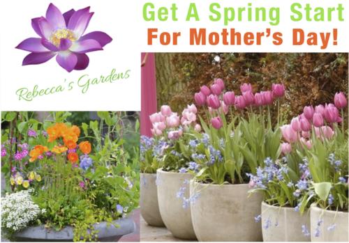 Special Offers — Rebecca\'s Gardens