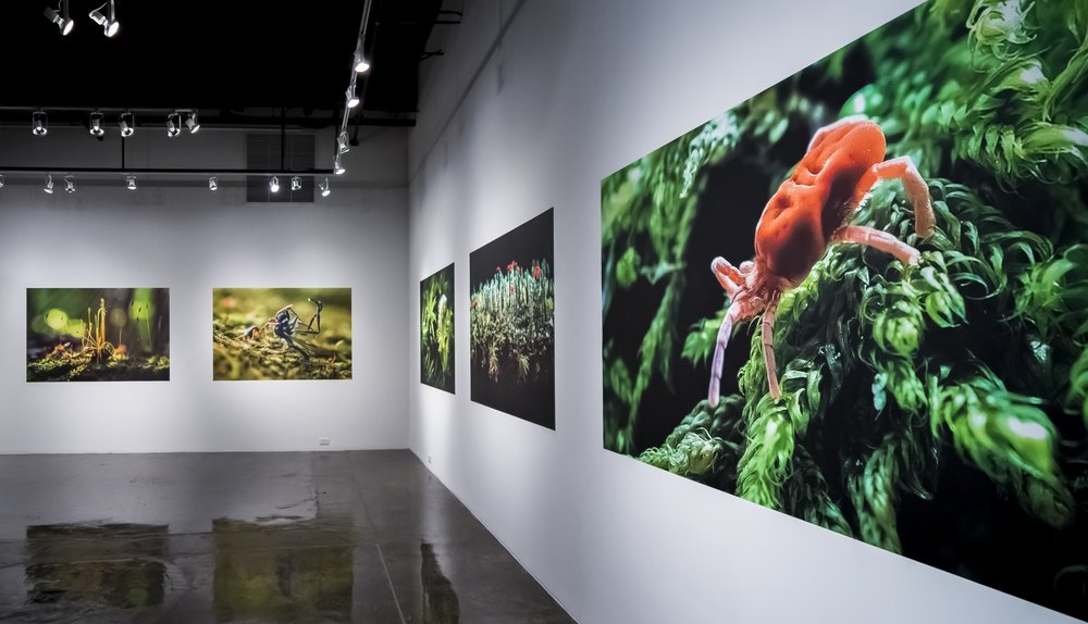 """The Evolution of Wonder(2015) was a gallery exhibition that appeared in the Power Plant Gallery located in Durham, North Carolina's """"American Tobacco Campus""""."""