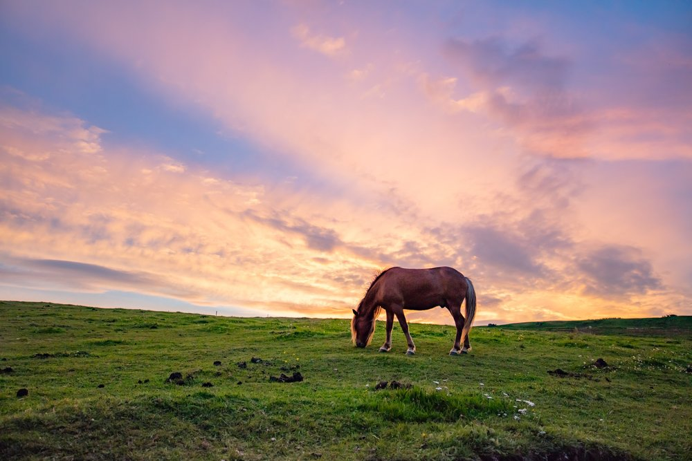 Equine Midnight Sun