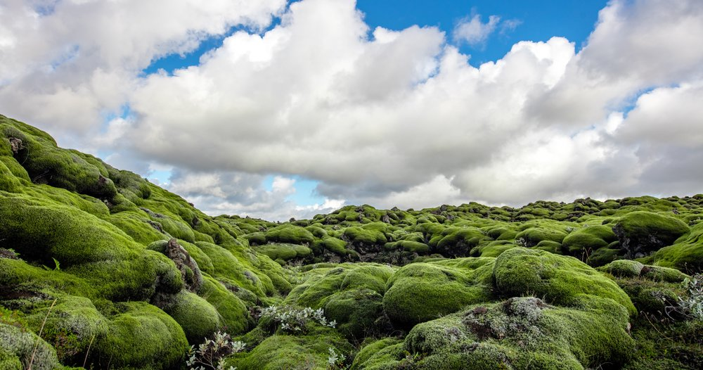 Lava, Moss, and Sky