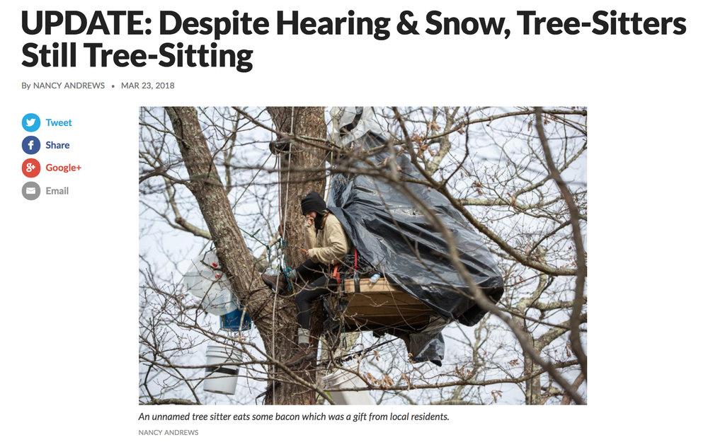 treesit-story.jpg