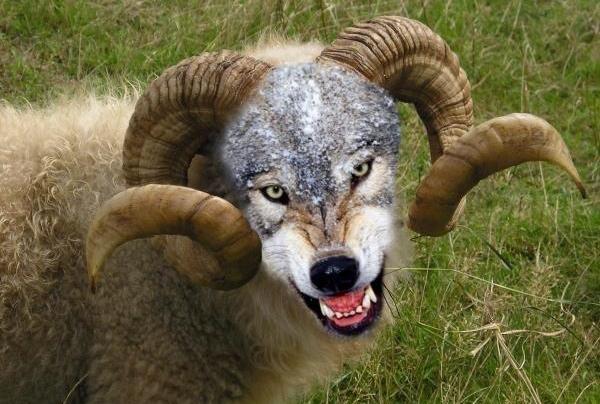 You callin' me sheep, sucka?