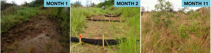 Time-series photos of a Humåtak Project restoration plot. An eroding hillside was identified.  Sediment filter socks were installed and tree seedlngs were planted to slow down water velocity and trap sediment to prevent it from reaching coral reefs in the ocean below.  Less than 1-year later, exposed soil was covered with new vegetation.