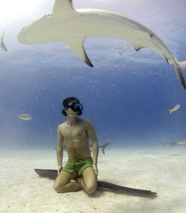 shark-5-web.jpg