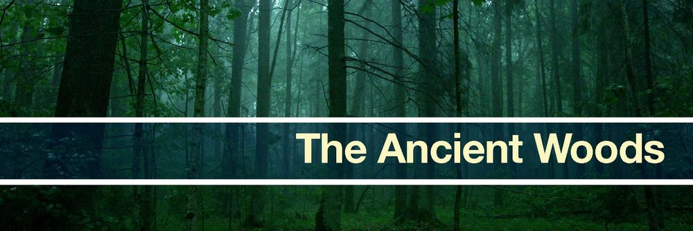 the ancients woods banner.jpg