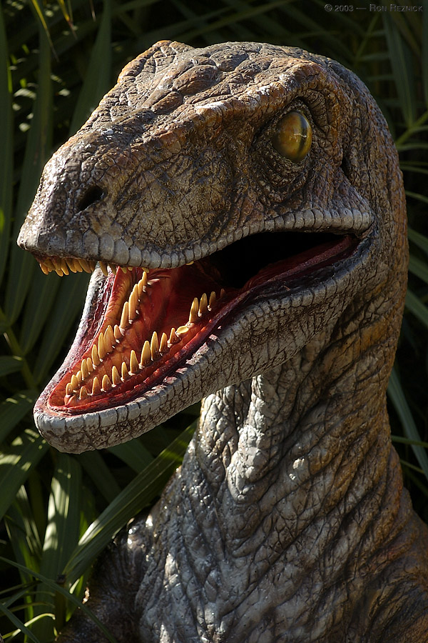A velociraptor