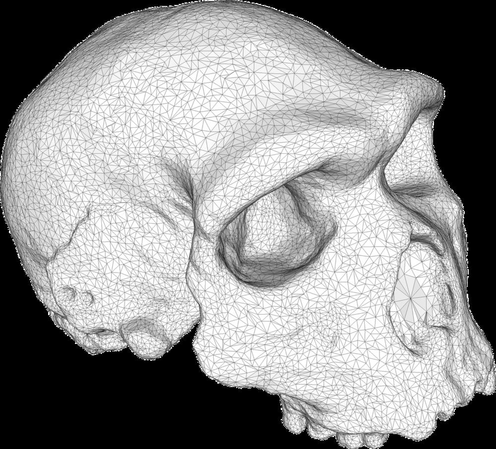 topology triangles modelling skull