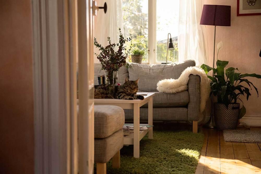 Åsgatan-Katt-Vardagrum.jpg