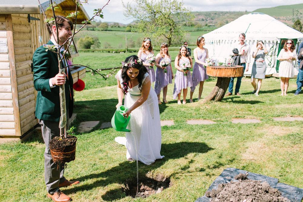 planting a wedding tree