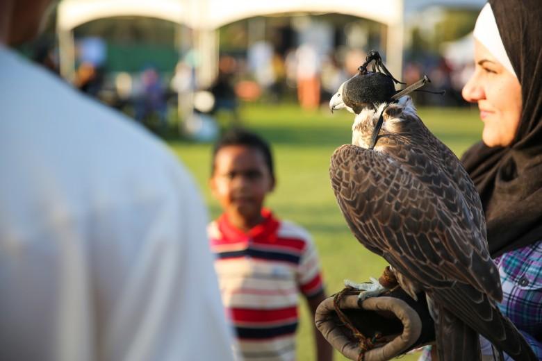 al-ain-falcon.jpg