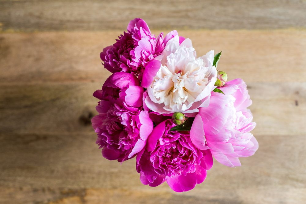 Peonies » Anita Joy Photography » Philadelphia Family and Wedding Photographer