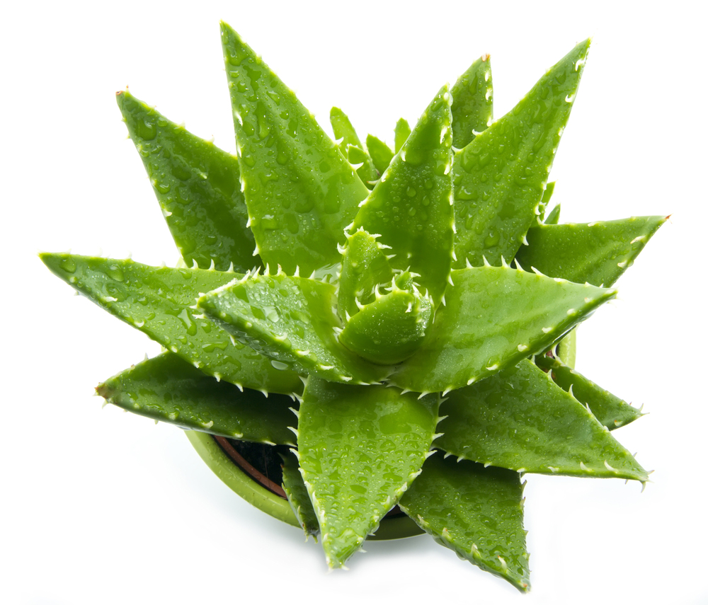 Global Beauty Secrets | Aloe Vera