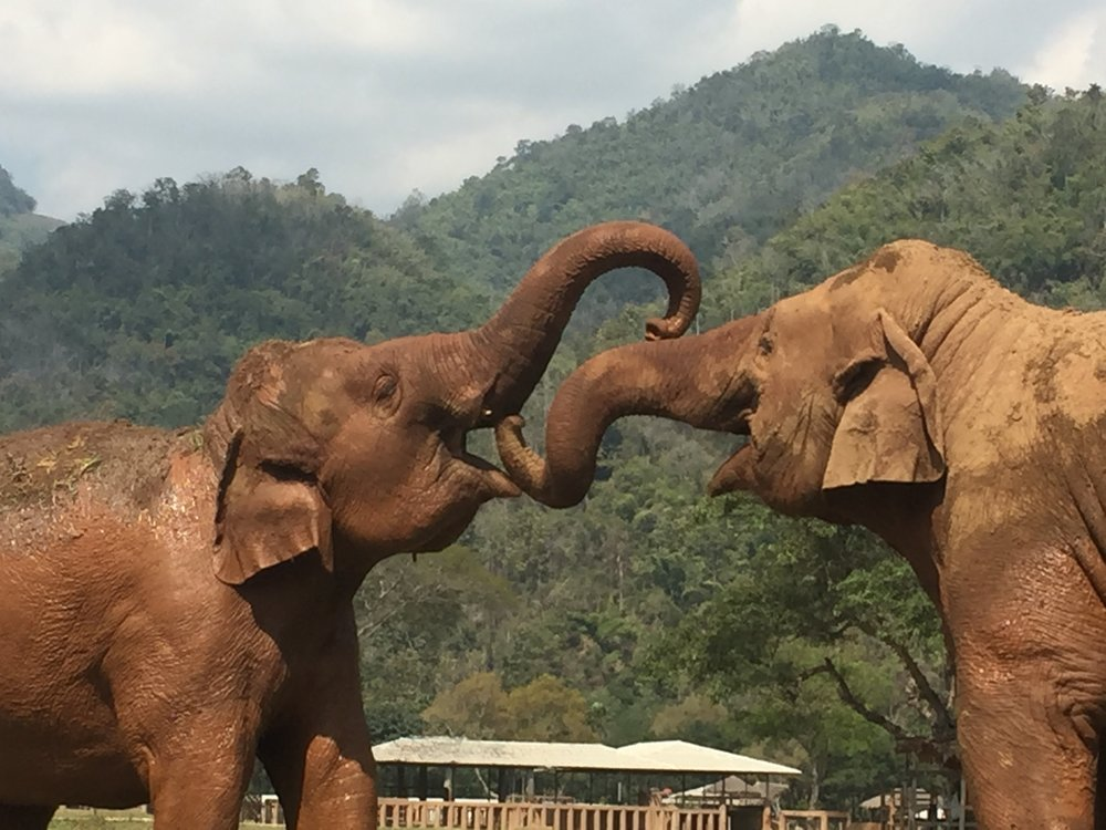SEVA: Your visit to the  Elephant Sanctuary Nature Park  supports rescuing abused elephants, changing policy of how elephants are treated and caring for hundreds of elephants and other animals.