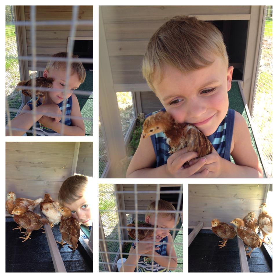 Mason & chickens.jpg