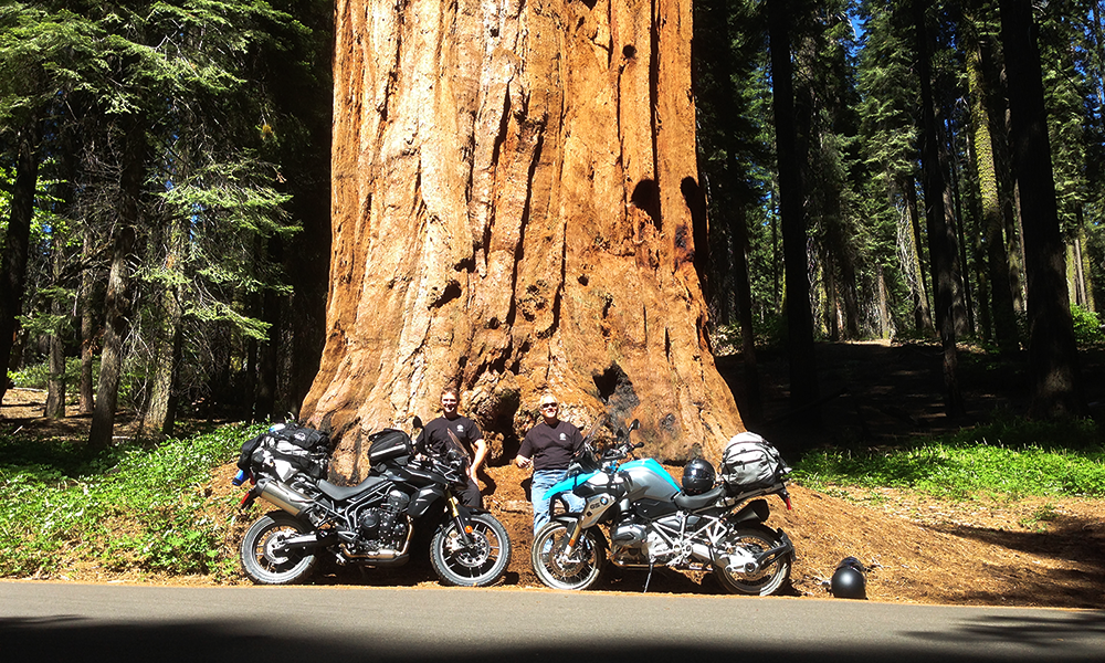 Brad-Drew-Both-Bikes-Sequoia-(1).png