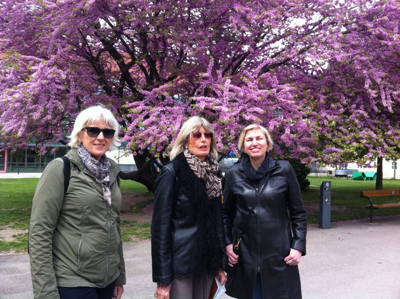 Vienna Greeters guests in front of the Judas Tree in the old hospital grounds