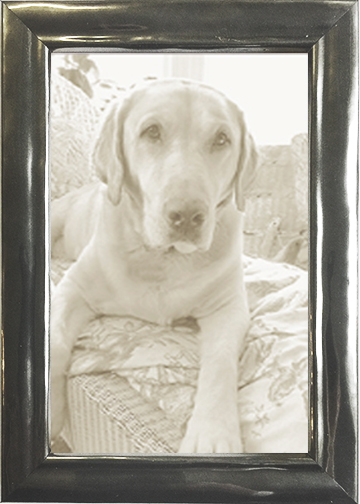 Thin Picture Frame Shiny Pewter Italian Picture Frame — MUSEUM ...