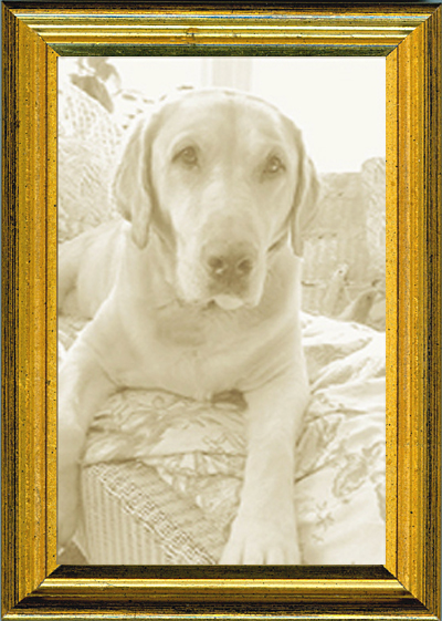 Thin Picture Frame - Gold Distressed — MUSEUM FACSIMILES
