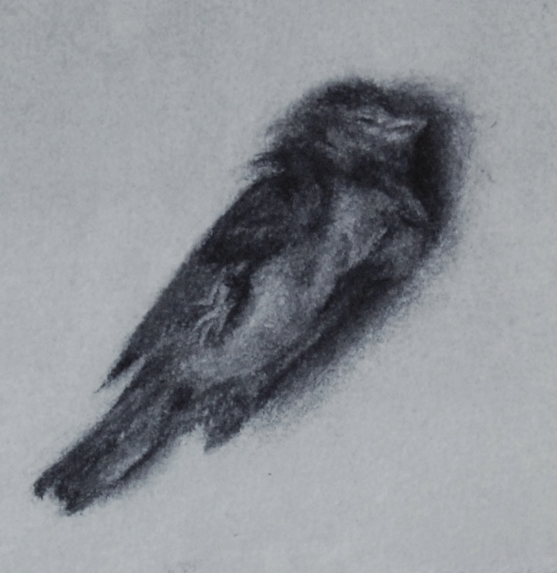 henry, charcoal on paper, 2013