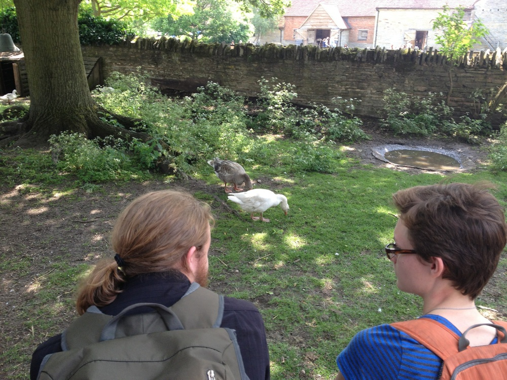 Ducks&Ardens.jpg