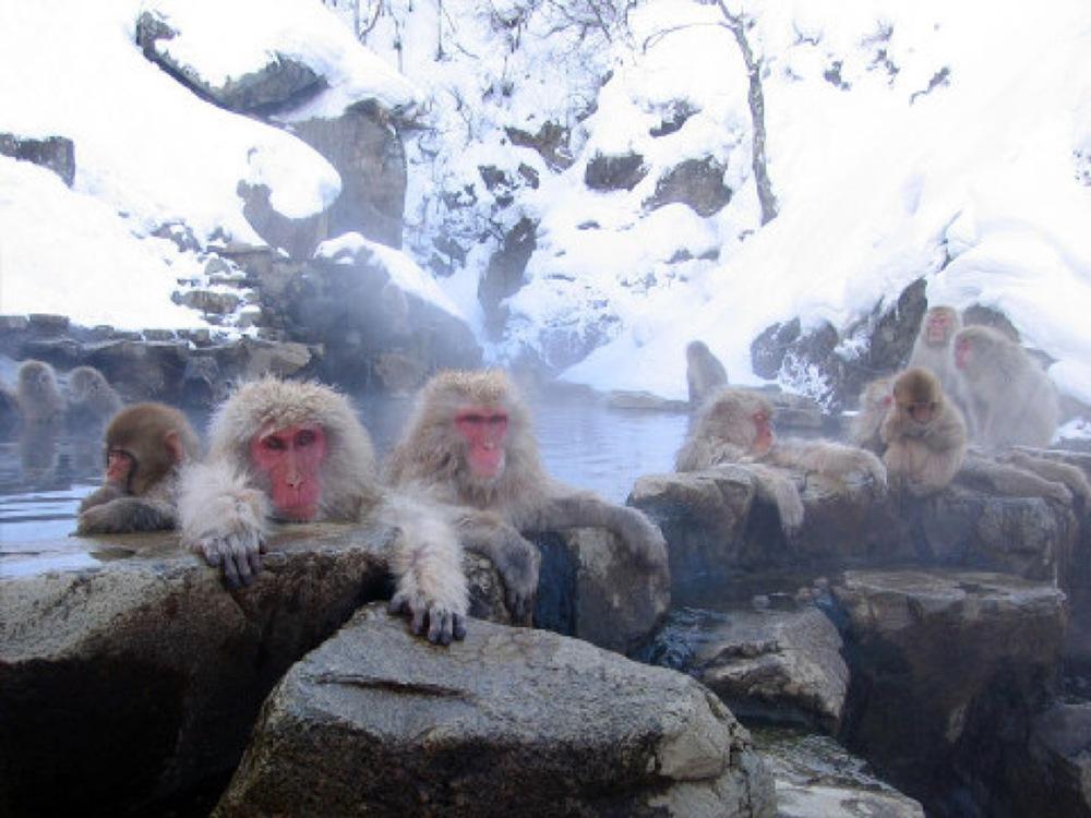 Jigokudani_hotspring_in_Nagano_Japan_001.jpg