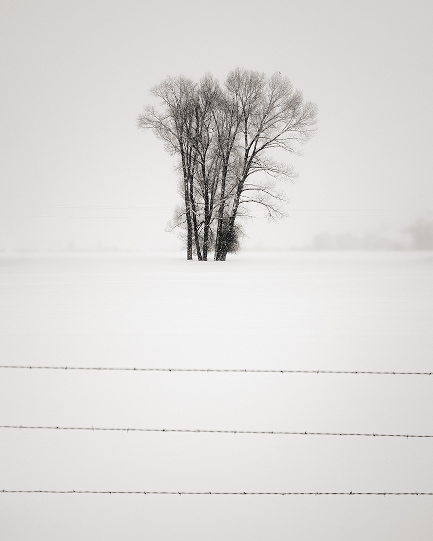 fenceandtree.jpg