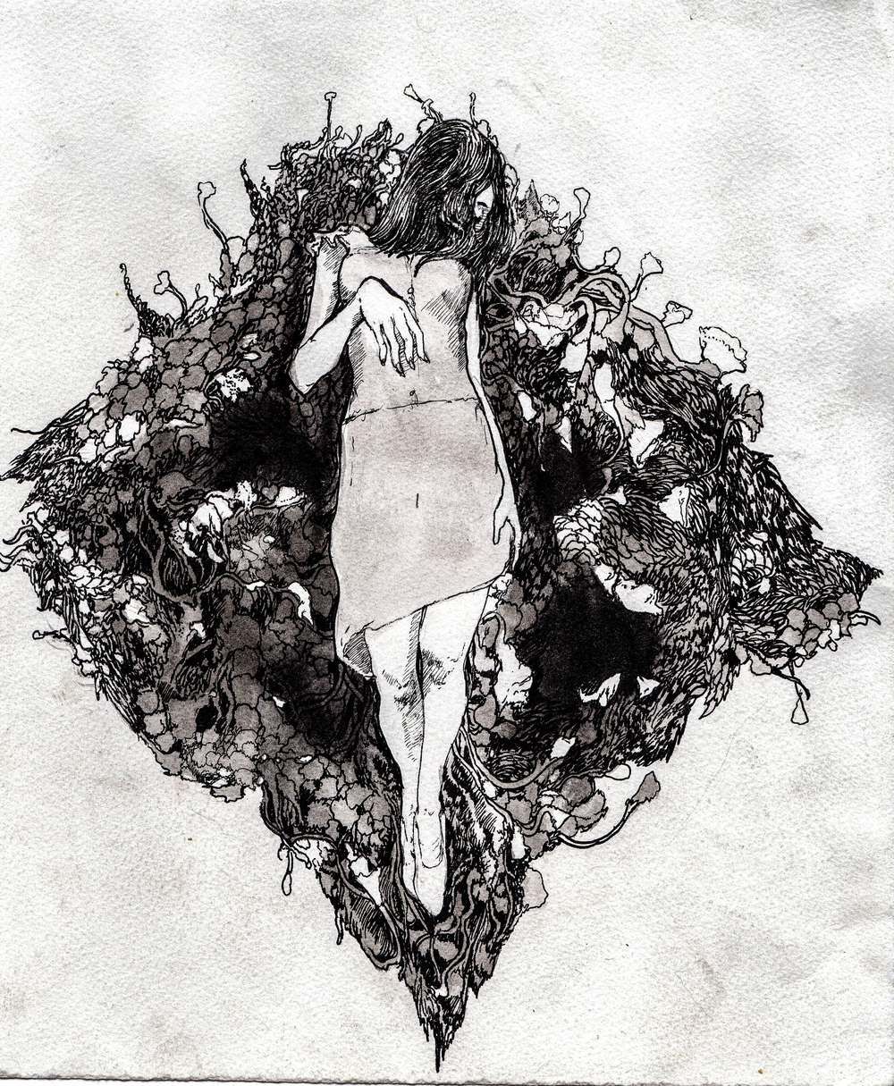 Where the wild roses grow.   2013. 12 x 12 inches. Ink wash on paper.