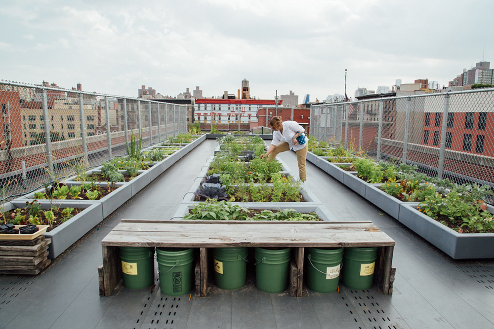 04.Fifth-Street-Farm-Naima-Green-Rooftop-Growing-Guide-4-2.jpg