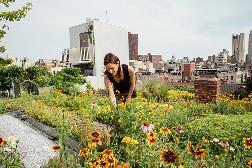 16.Goode-Green-Naima-Green-Rooftop-Growing-Guide-6.jpg