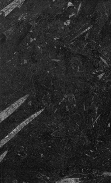 fossil nero